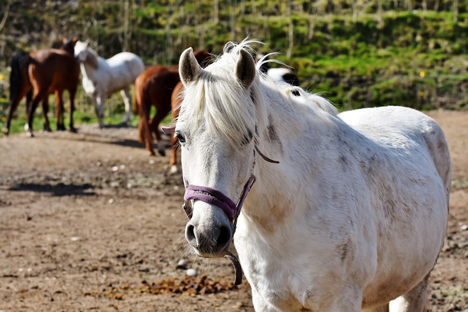 Horseback Riding Lessons Business Management
