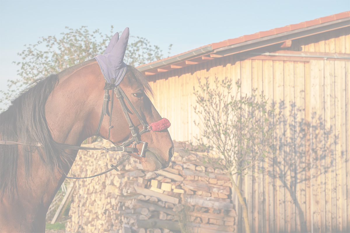 Manage Your Equestrian Lessons and Members